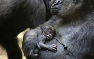 الصورة: بالصور.. لقطات لطيفة لصغار الحيوانات
