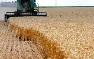 الصورة: مصر تشتري 3.27 ملايين طن من القمح المحلي في موسم الحصاد