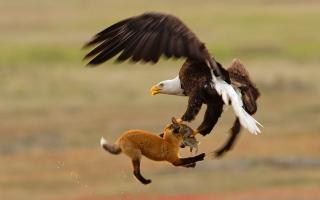 الصورة: بالصور.. لقطات مُلفتة لطيور تفوز بجائزة أودوبون 2019