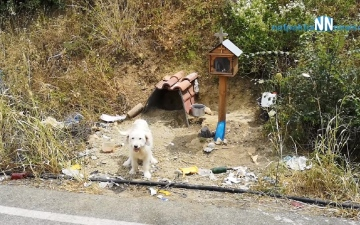 الصورة: بالفيديو.. كلب ينتظر صاحبه في مكان وفاته منذ 18 شهراً
