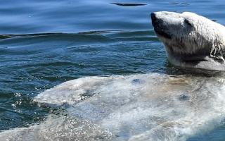 الصورة: بالصور.. حيوانات أوروبا تخفف على نفسها من الحر بالسباحة