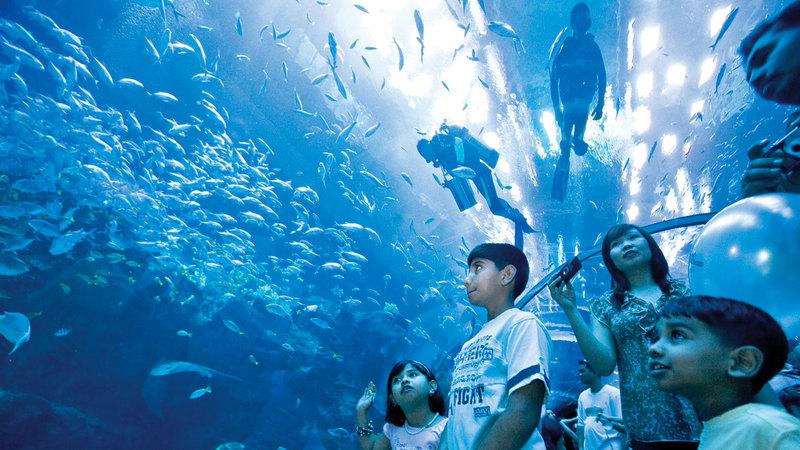 «دبي أكواريوم» يضمّ آلاف الأسماك والكائنات البحرية.