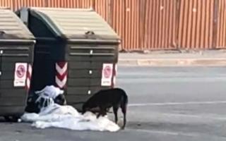 الصورة: كلاب ضالة