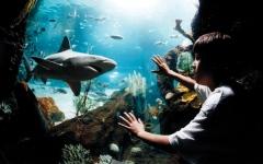 الصورة: مراكز دبي للتسوق.. من الـ «شوبينغ» إلى المغامرات والترفيه