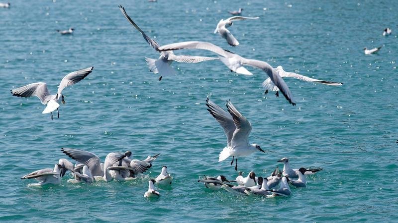 مجموعة الجزر والمناطق المحمية بالدولة تمثل محطات وموائل مهمة للطيور المهاجرة. تصوير: أحمد عرديتي