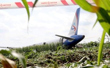 الصورة: طيور النورس تجبر طائرة ركاب روسية على الهبوط اضطراريا في حقل ذرة