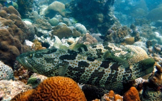الصورة: 7 تحديات تهدد استدامة المصايد السمكية في الدولة