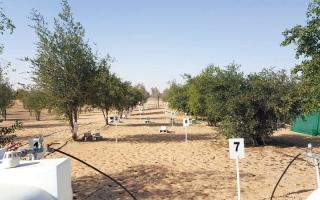 تطبيقات رقمية لمراقبة المياه الجوفية في أبوظبي