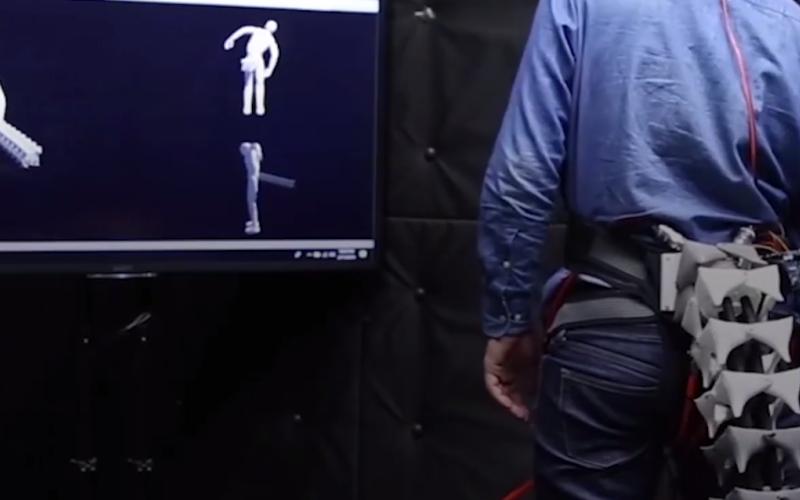 """الصورة: """" آراك"""" ذيل يعيد التوازن للجسم ويحمي من السقوط"""