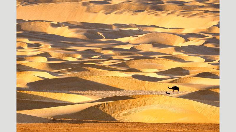 عمران الأنصاري - الإمارات