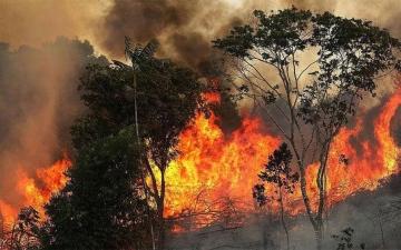 الصورة: «الأمازون» تشعل أزمة بين الرئيس البرازيلي وماكرون
