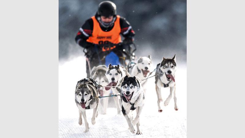يستخدم سكان غرينلاند منذ قرون الزلاجات التي تجرها الكلاب كوسيلة نقل رئيسة. إي.بي.إيه