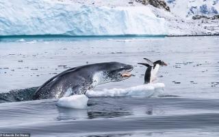 الصورة: لقطات مذهلة لجمال الطبيعة حول العالم