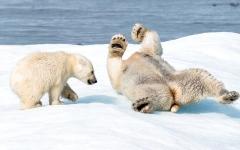 الصورة: فلوريان ليدوكس رحالة القارة القطبية: اللقطة المميّزة هدفي في الحياة