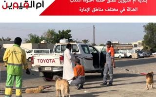 الصورة: حملة لاحتواء الكلاب الضالة في أم القيوين