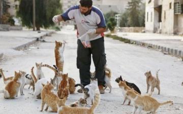 الصورة: بعد حلب.. «الرجل القط» ينقذ الحيوانات الضالة في إدلب