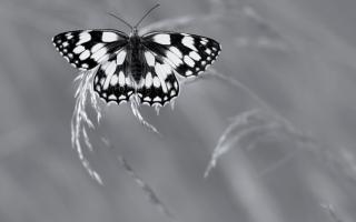 الصورة: الصور الفائزة بجائزة الحياة البرية البريطانية لعام 2019