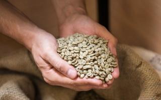 الصورة: القهوة الخضراء سلاحك لإنقاص الوزن