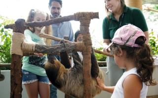 الصورة: «ذا غرين بلانيت» و«ماتيل بلاي» تحتفلان باليوم العالمي للحيوان
