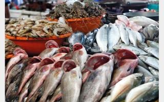 الصورة: تعرف إلى شروط الحصول على تصريح إنشاء مزرعة أسماك في الدولة
