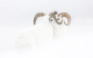 الصورة: صورا قادت أصحابها للفوز بجائزة مصور الحياة البرية