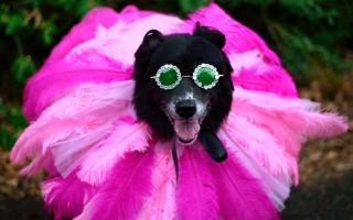 """الصورة: بالصور.. كلاب منهاتن تشارك فى احتفالات الـ """"هالوين"""" بملابس وإكسسوارات غريبة"""