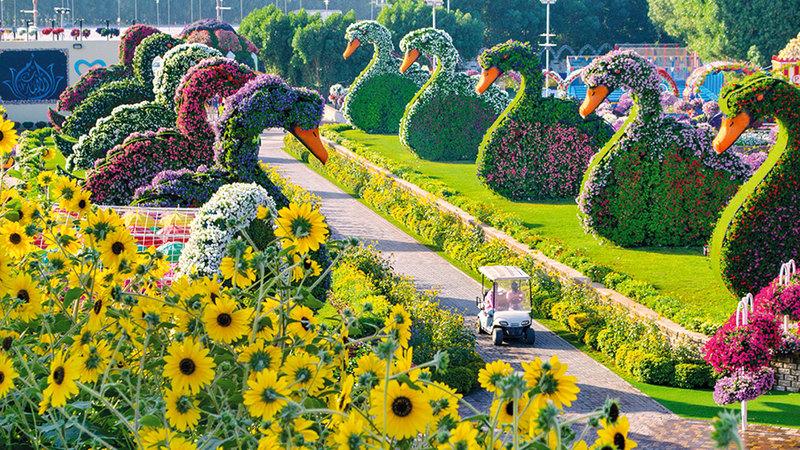 دبي ميراكل جاردن 50 مليون زهرة بانتظاركم حياتنا جهات