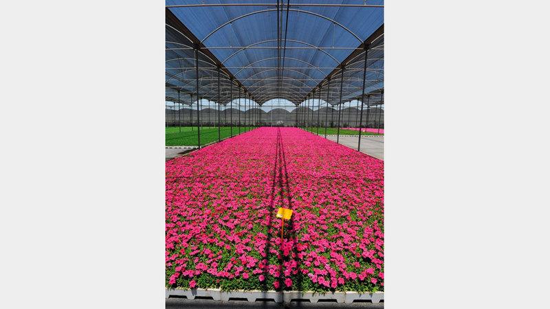 بلدية دبي تسهم في زراعة آلاف النباتات في «إكسبو 2020».   من المصدر