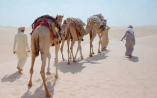 الصورة: 125 ألف سنة من تاريخ أرض الإمارات.. على الشاشة قريباً