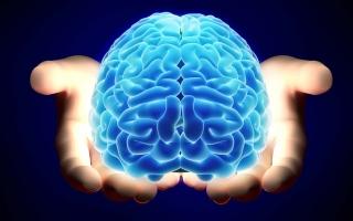 الصورة: اكتشاف يقلب «الدماغ»: للإنسان أكثر من مخ.. الأول بالأمعاء