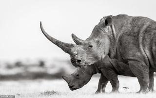 الصورة: بالصور.. فخامة وحيد القرن