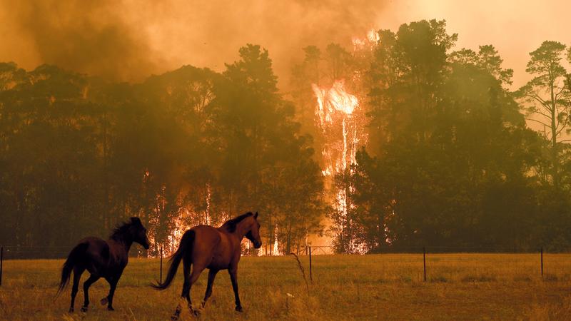 النيران تواصل الزحف في شمال وجنوب وغرب سيدني. إي.بي.إيه
