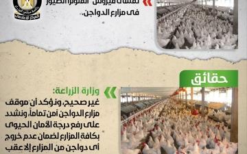 """الصورة: مصر تنفي انتشار """"إنفلونزا الطيور"""" في مزارع الدواجن"""