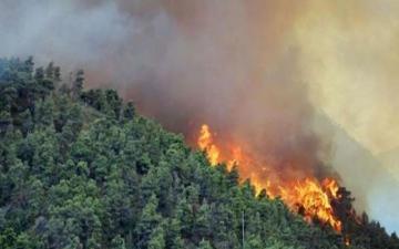 الصورة: لصوص يستغلون حرائق غابات أستراليا في عمليات نصب واحتيال