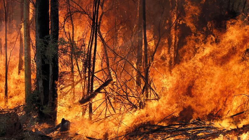 الحرائق التهمت مساحات شاسعة من الغابات. أ.ب