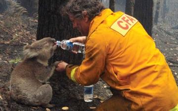 الصورة: الكوالا يدفع الثمن.. أستراليا تنجح في كبح أقوى «حريق ضخم»