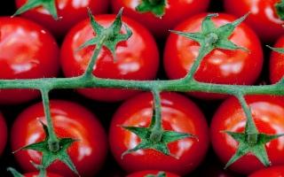 الصورة: أخصائية خصوبة تنصح الأزواج: عليكم بالطماطم