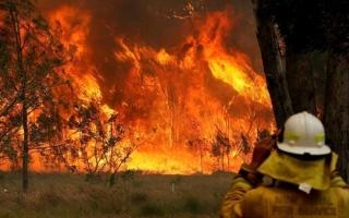 الصورة: طيران الإمارات تجمع تبرعات لحرائق استراليا