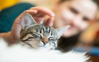 الصورة: كيف تعرف أنك تعاني من حساسية القطط؟