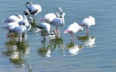 الصورة: دبي.. تجارب سياحية مشوقة في أحضان الطبيعة البرية