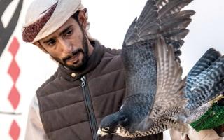 الصورة: 8 أشواط في فئة الناشئين ببطولة فزاع للصيد بالصقور