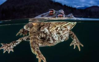 الصورة: بالصور.. الحياة تحت الماء