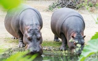الصورة: حديقة الإمارات للحيوانات تحتفل بوصول «ناجوما»