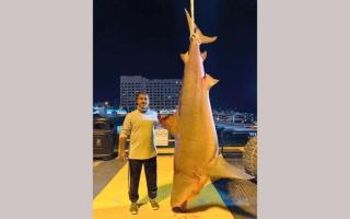 الصورة: «صائد القروش» الإماراتي يواصل هوايته.. ويصطاد سمكة عملاقة