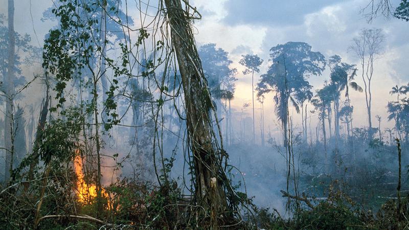 حرق الغابات لتوسيع الأراضي الزراعية لإنتاج الصويا. غيتي