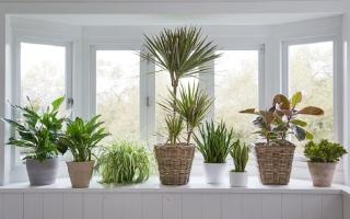 الصورة: ما هي النباتات الممكن زراعتها بدون الكثير من أشعة الشمس؟