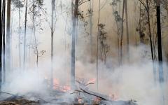 الصورة: العاصمة الأسترالية في حالة تأهب قصوى مع اقتراب حرائق الغابات