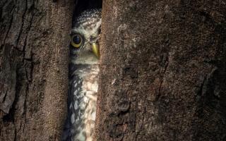 """الصورة: الصور المنافسة على جائزة """"أفضل مصوّر طيور 2020"""""""