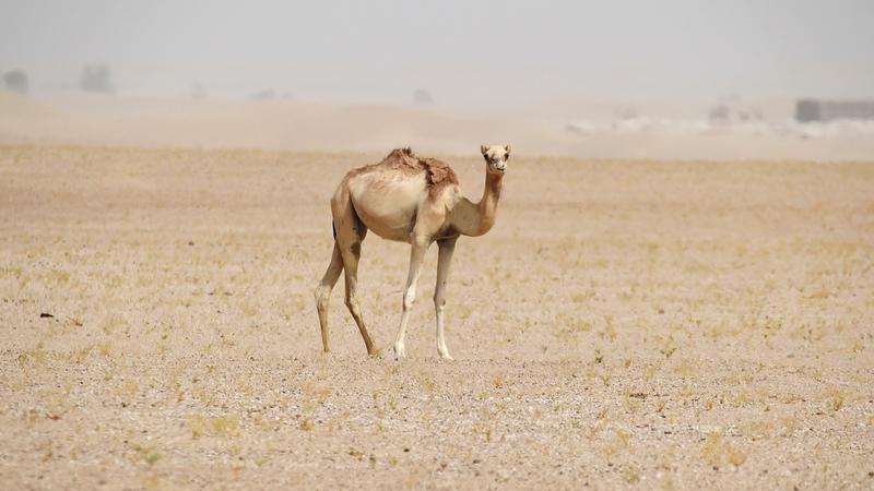 صحراء المرموم محمية طبيعية تزخر بثروات التراث والثقافة المحلية. أرشيفية