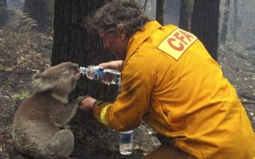 الصورة: 75 % من الأستراليين تأثروا بحرائق الغابات